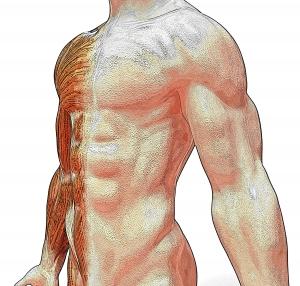 anatomy-1349598-m.jpg